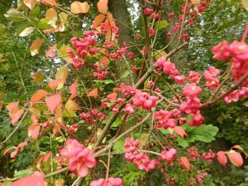 Herbst_02