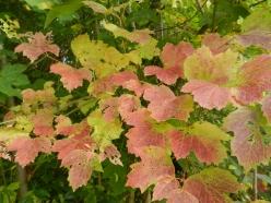 Herbst_05