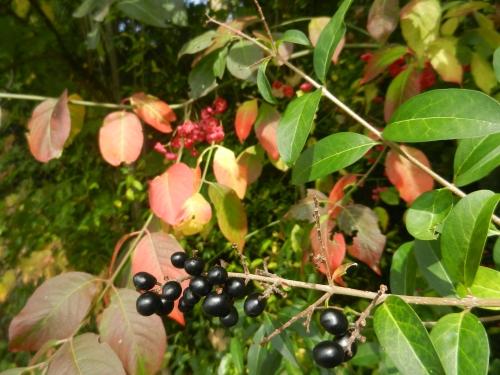 Herbst_01