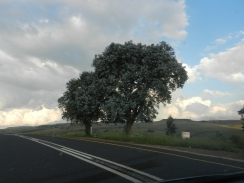 Mpumalanga_04