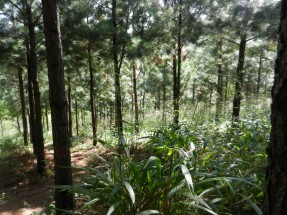 Loerie-Trail_04
