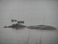Kruger-Nationalpark_18