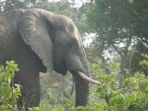 Kruger-Nationalpark_15