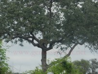 Kruger-Nationalpark_16