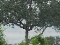 Kruger-Nationalpark_16