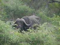 Kruger-Nationalpark_17