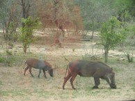 Kruger-Nationalpark_13