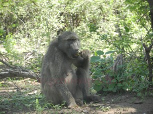 Kruger-Nationalpark_14