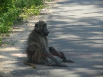 Kruger-Nationalpark_12