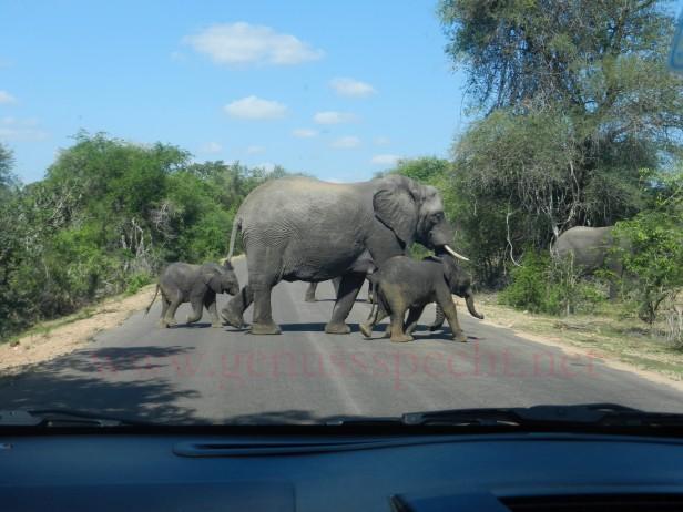 Kruger-Nationalpark_09