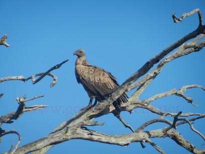 Kruger-Nationalpark_10