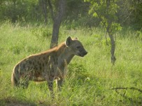 Kruger-Nationalpark_08