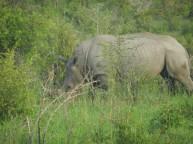 Kruger-Nationalpark_05