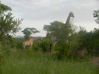 Kruger-Nationalpark_06
