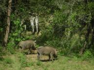 Kruger-Nationalpark_03