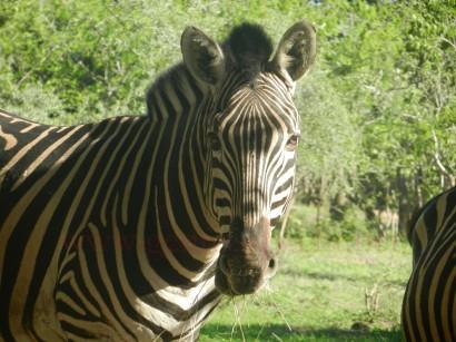Kruger-Nationalpark_04