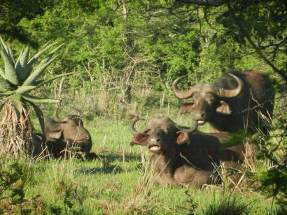 Kruger-Nationalpark_01