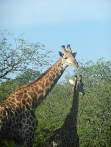 Kruger-Nationalpark_02