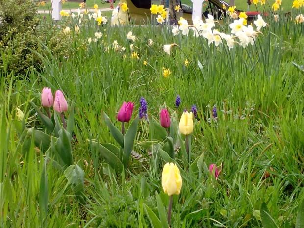 Tulpen-Gaten