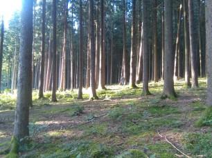 Schwammerlsuchen-im-Wald