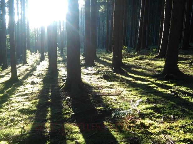 Wald_02